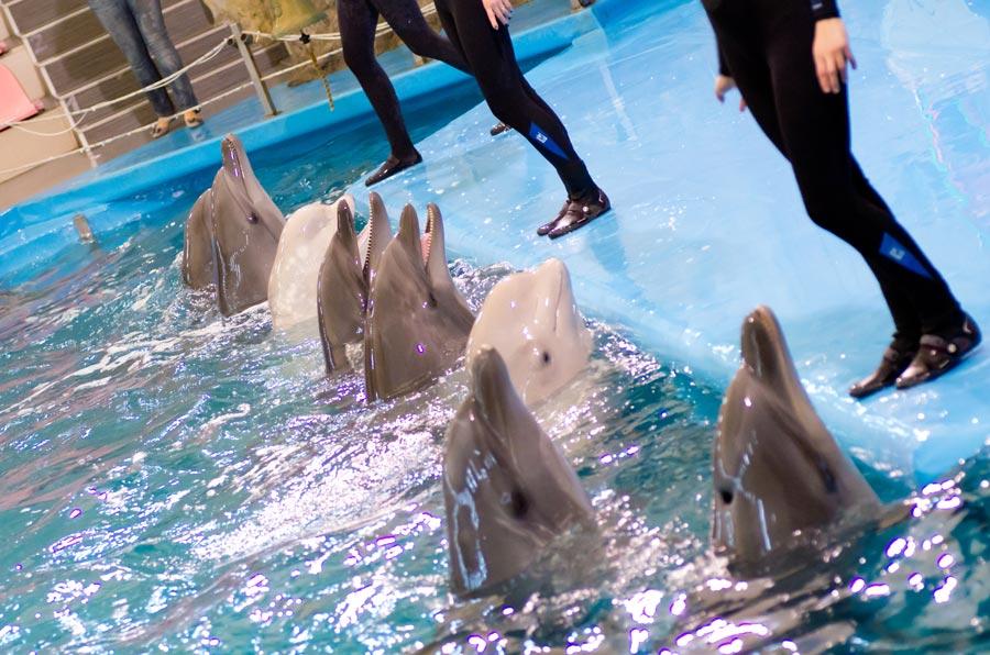 Сеть Дельфинариев «НЕМО»